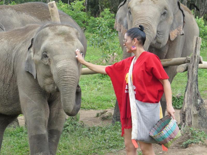 Elefante interacción en Pueblo del Blue Tao por medio día. Medio día  Elefantes interacción Blue Elephant Thailand Tours