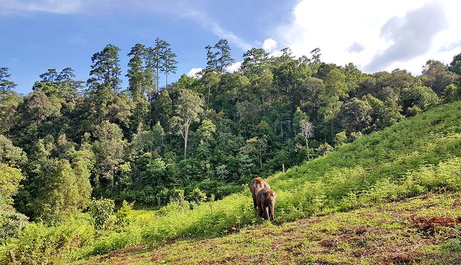 Blue Elephant tours Chiang Mai, Thailand