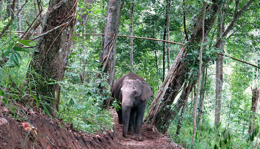 Elephant tours Chiang Mai, Thailand